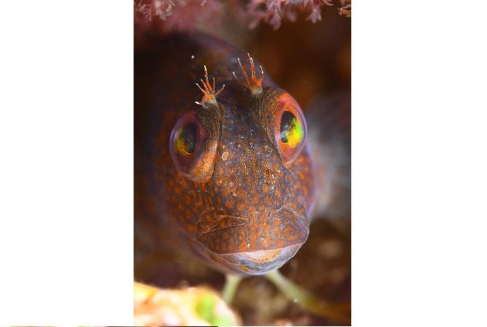 Macro poisson. © équipe n° 4 - Julien Carpels et Martine Ruoppolo