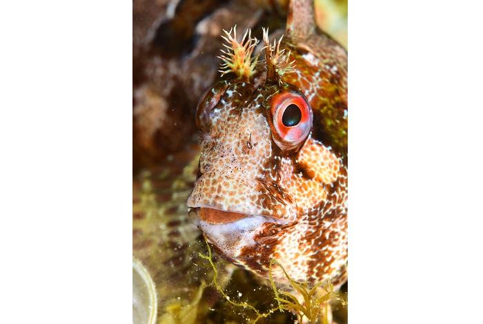 Macro poisson. © équipe n° 6 - Éric Saint-Martin et Mikel Calbete