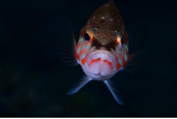 Macro poisson. © équipe n° 7 - David Roger et Loic Thomas