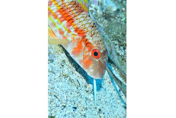 Macro poisson. © équipe n° 11 - Nathalie Monturet et Christine Cazal