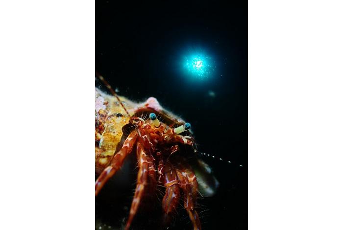Macro non poisson. © équipe n° 13 - Christiane Deltour et Marc Debatty
