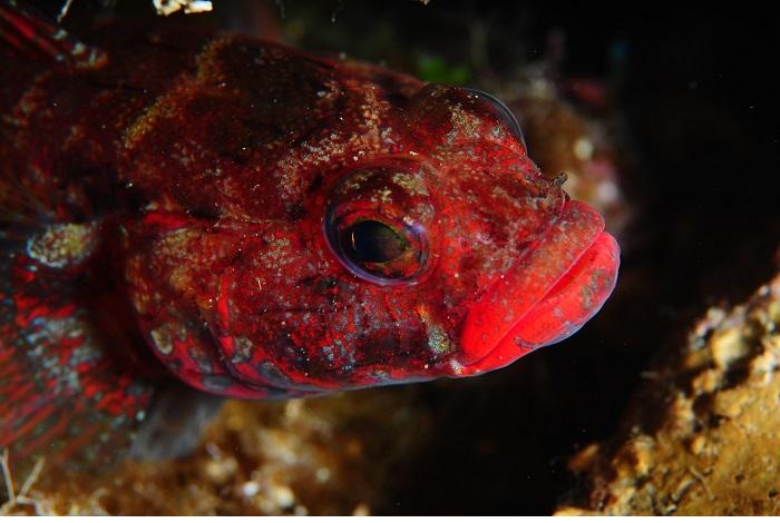 Macro poisson. © équipe n° 13 - Christiane Deltour et Marc Debatty