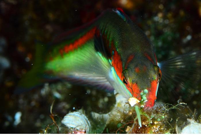 Macro poisson. © équipe n° 14 - Jean-François Dermit et Mikel Calbete