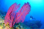 40èmes championnats de France de photo sous-marine : les images en compétition