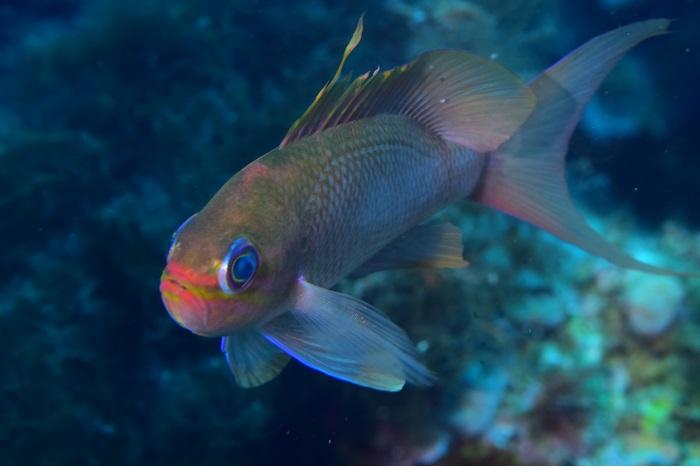Macro poisson. © équipe n° 19 - Charles Coulange et Christine Leherquier