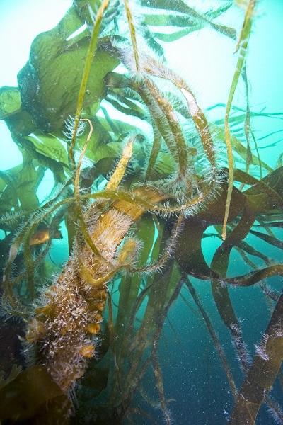 Les algues vous dévoilent leurs secrets... © Daniel Deflorin