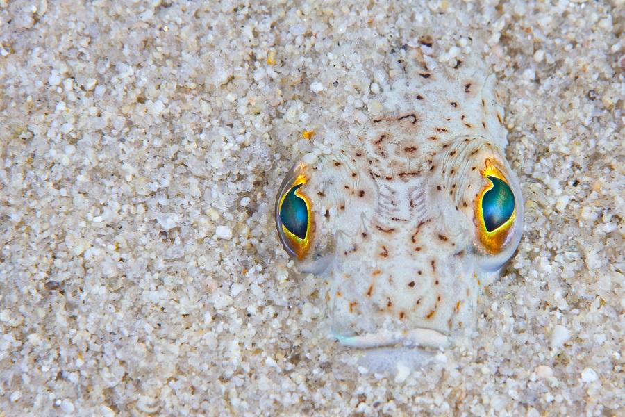 Plongez dans l'univers du photographe Nicholas Samaras. © Nicholas Samaras