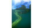 Le palmarès des Clichés d'eau douce 2021