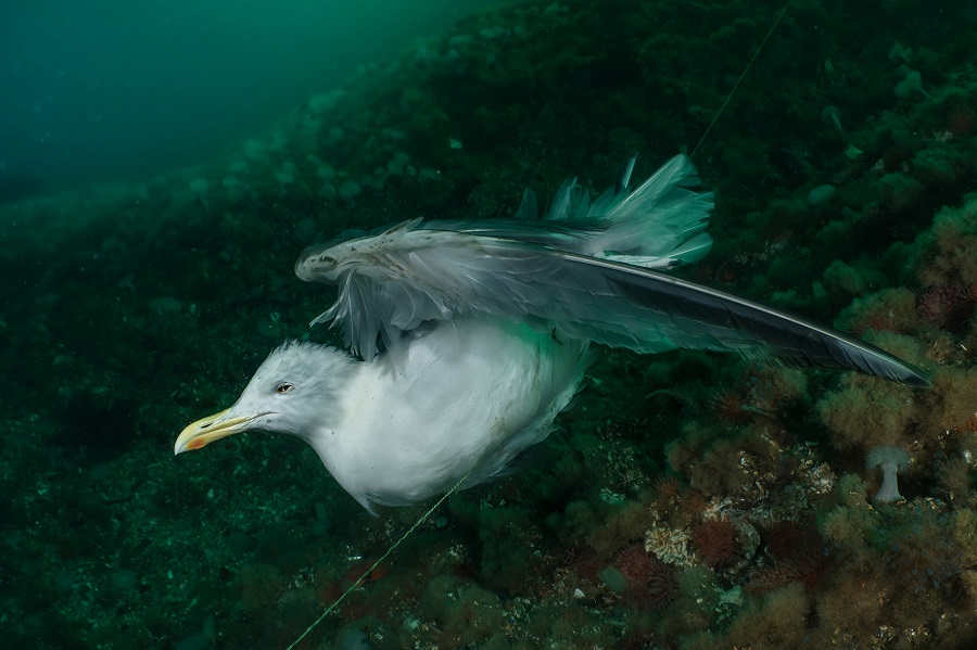 2ème place - Photographe de l'année pour la protection des océans. - Galice Hoarau. © Galice Hoarau - Ocean Photographer awards
