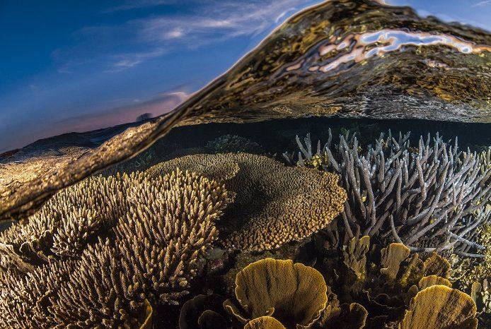 Mi-air mi-eau des jardins de corail denses de Coral Bay, Ningaloo Reef. 3ème place portfolio - Alex kydd © Alex Kydd - Ocean photography awards