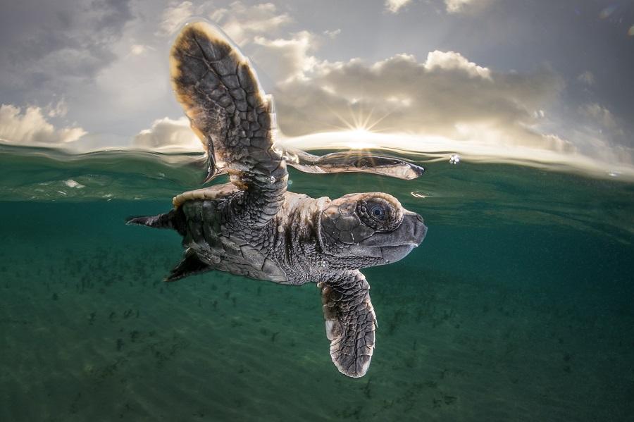 Troisième place Photographe de l'année 2021 - Matty Smith © Matty Smith - Ocean Photographer awards
