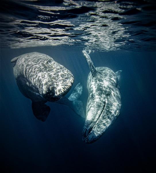 3ème place - Prix du jeune photographe de l'année - Mikayla Jones. © Mikayla Jones - Ocean Photography awards