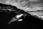 Le palmarès du Ocean photography awards 2021