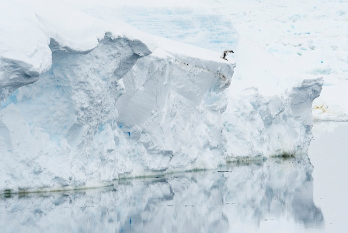 Un poussin solitaire debout sur la banquise, car la glace de mer s'est rompue trop tôt. 1ère place portfolio - Stefan Christmann © Stefan Christmann - Ocean photography awards