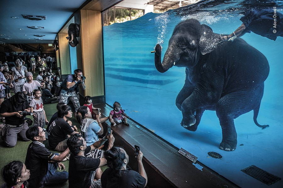 Prix photojournaliste. © Adam Oswell, Wildlife Photographer of the Year