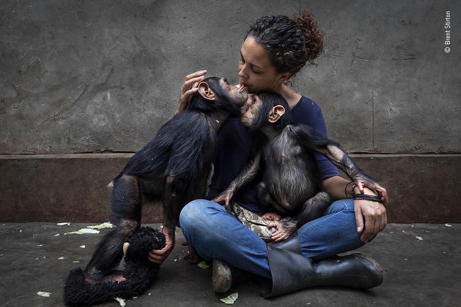 Prix photojournaliste qui raconte une histoire. © Brent Stirton, Wildlife Photographer of the Year
