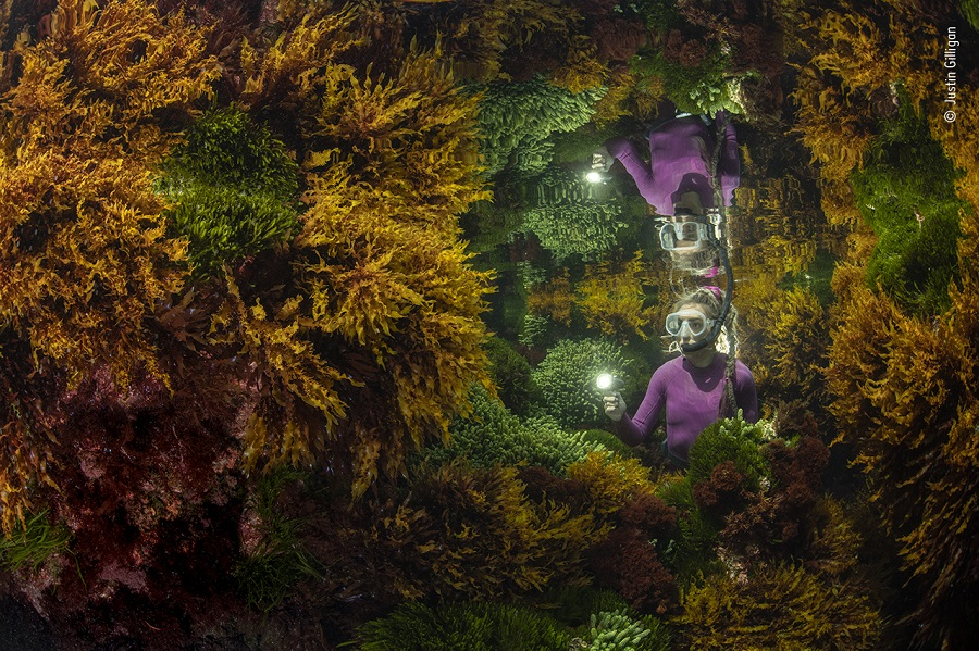 Prix plantes et champignons. © Justin Gilligan, Wildlife Photographer of the Year