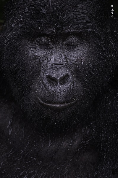Prix portrait d'animal. © Majed Ali, Wildlife Photographer of the Year