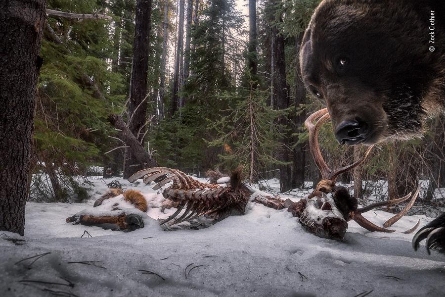 "Prix ""Animaux dans leur environnement"". ©-Zack Clothier, Wildlife Photographer of the Year"