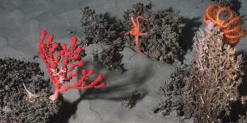 Les canyons sous-marins, des réservoirs de vie menacés