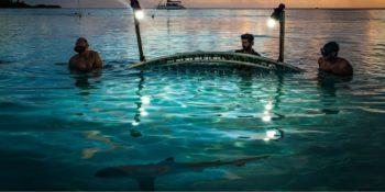 """Première diffusion pour le documentaire """"700 requins dans la nuit"""""""