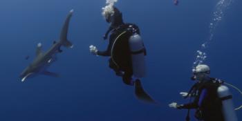 """Vidéo : """"Legacy"""", à la rencontre du requin océanique en mer Rouge"""