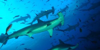 Sélection vidéos : Galápagos, îles oubliées d'Indonésie, épave du Pourquoi pas ?, plongée en eau douce...