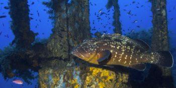 Sélection vidéos : sentier sous-marin d'Olbia, épaves corses, raies-mantas dans les Revillagigedo