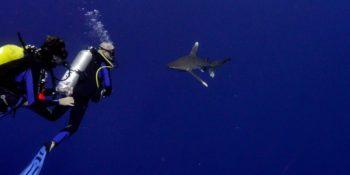 Steven Surina et Jan Kounen face au requin longimane.