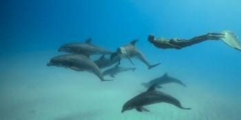 Stéphane Tourreau à la rencontre des dauphins de Bimini